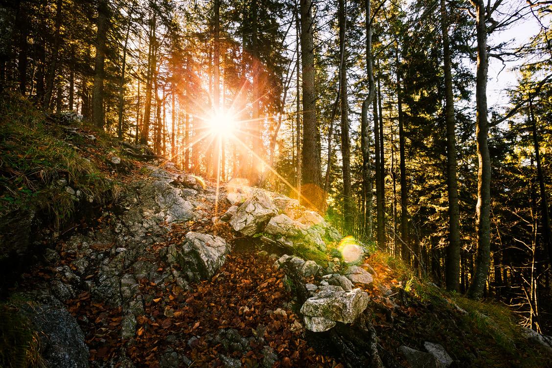 Goldener Oktober im Wald
