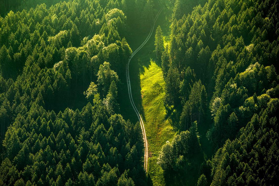 Ein Waldweg von oben