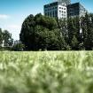 20090605-3663-urban-nature